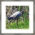 Blue Heron With Lunch Framed Print