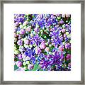 Blue Purple Hydrangea Flower Macro Art Framed Print