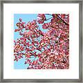 Blue Sky Floral Art Print Pink Dogwood Tree Flowers Baslee Troutman Framed Print