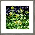 Blue Wall Yellow Columbine Framed Print