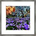 Bluebells Framed Print