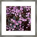 Bog Rosemary Framed Print