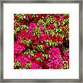 Bougainvillea And Foliage Framed Print