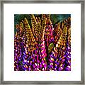Bouquet Of Lupin Framed Print