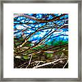 Branches 31 Framed Print