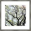 Branches Against Sky In Spring Outback Framed Print