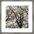 Branches Intertwined Framed Print