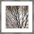 Branches Silhouettes Mono Tone Framed Print