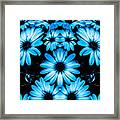 Bright Blue Daisies Framed Print