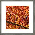 Bright Colorful Autumn Tree Leaves Art Prints Baslee Troutman Framed Print
