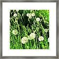 Bright Grass 2 Pd2 Framed Print