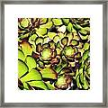 Bright Succulents Framed Print