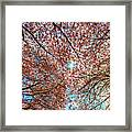 Bright Sun With Long White Rays Shines From The Crown Framed Print