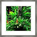 Bromeliads El Yunque National Forest Framed Print