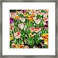 Brookgreen Gardens Tulips Framed Print