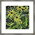 Brown-eyed Susans II Framed Print