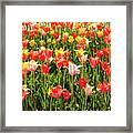 Brushed Tulips Framed Print