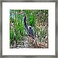 Bue Heron Framed Print