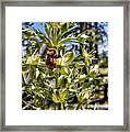 Bumblebee On Elkweed Blossoms Framed Print