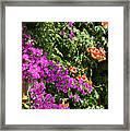 Burgazada Island Flower Color Framed Print