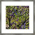 Burnt Bush Framed Print