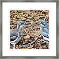 Bush Stone Curlew Pair Framed Print