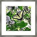 Butterfly In The Lilac No. 1 Framed Print