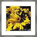 Butterfly On Balsamroot Framed Print