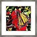Butterfly On Bougainvillea Framed Print