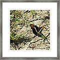 Butterfly On Cracked Ground Framed Print