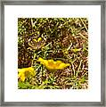 Butterfly On Flower Framed Print