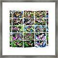 Butterfly Plethora I Framed Print