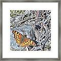 Butterfly Rock Framed Print
