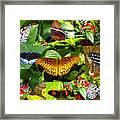 Butterfly Work 10 Framed Print