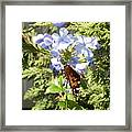 Butterfly X Framed Print