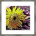 Cabbage And Mum Framed Print