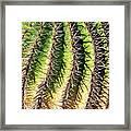 Cacti Needles Framed Print