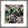 Cactus, Arches National Park Framed Print