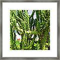 Cactus At Pilgrim Place In Claremont-california  Framed Print
