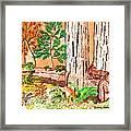Calif. Redwoods Framed Print