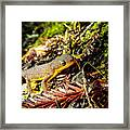 California Newt 3 Framed Print