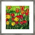 Camille's Tulips Framed Print