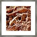 Camouflaged  Sun-drenched  Climb Framed Print