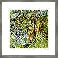 Can You See Me........ Framed Print