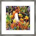 Canna Framed Print by Shaina  Lee