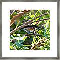 Cape Batis Framed Print