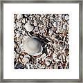 Captiva Island Iv Framed Print