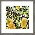 Carambola Fruit On The Tree Framed Print