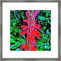 Cardinal Flower Near Schroon River In The Adirondacks-new York  Framed Print