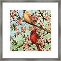Cardinals In Apple Blossoms Framed Print